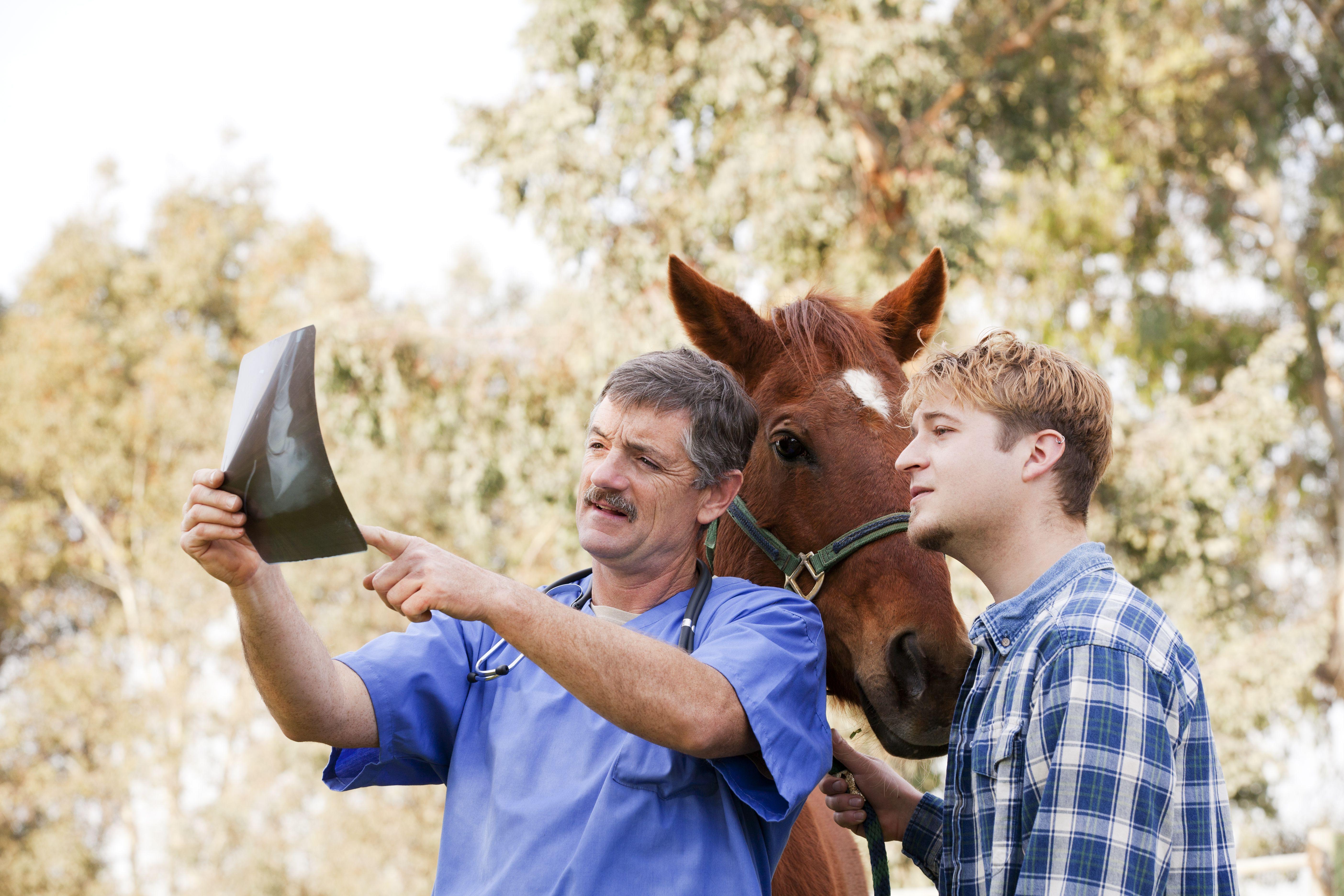 Revise los resultados de los rayos X con el dueño del caballo mientras el caballo está detrás de ellos.