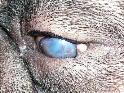 Symptoms and Causes of Blepharospasm in Cats and Dogs