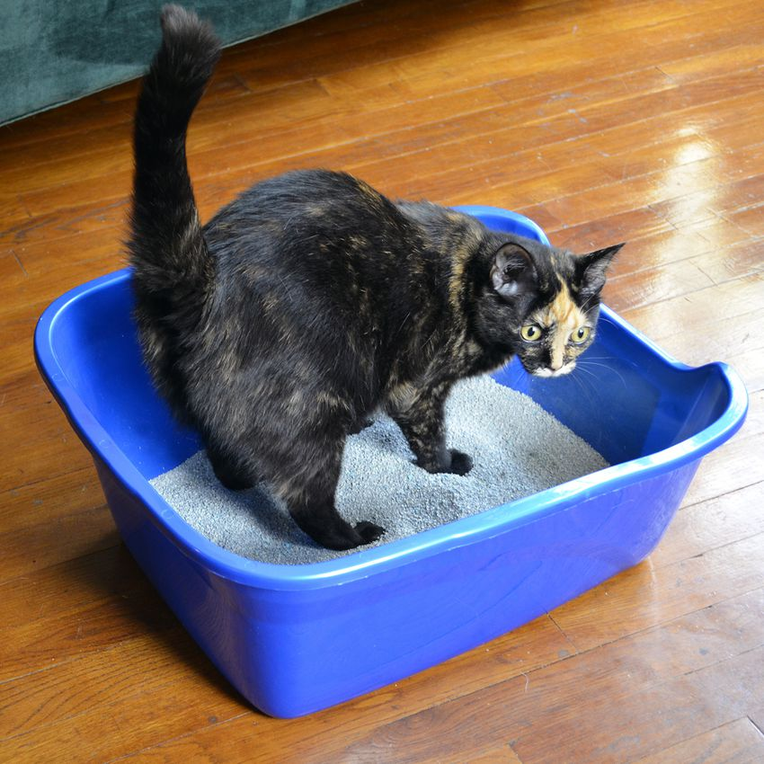 Van Ness Giant High-Sided Cat Litter Pan