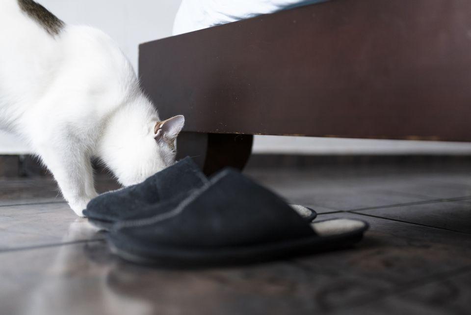 zapatos con olor a gato