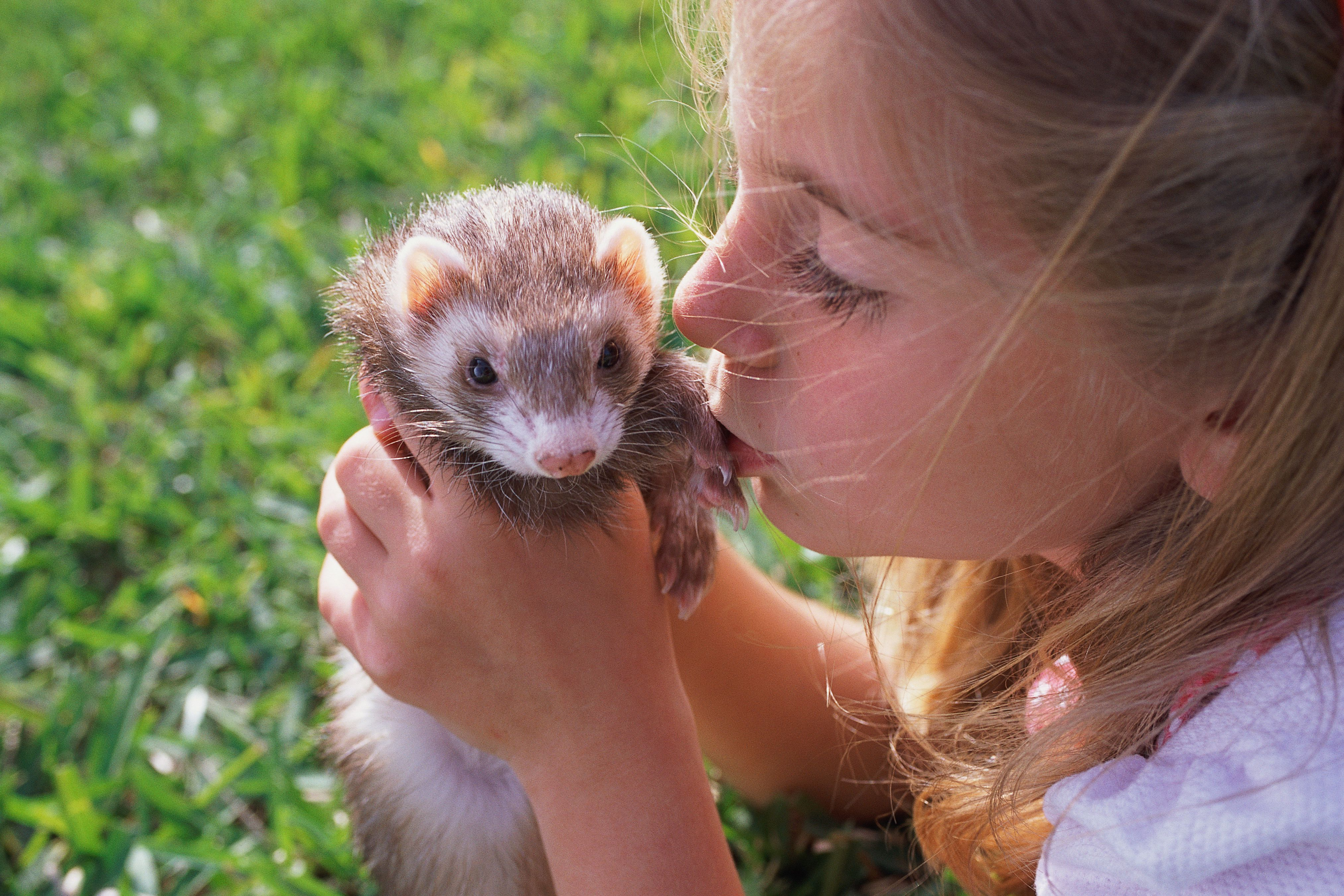Girl kissing ferret affectionately