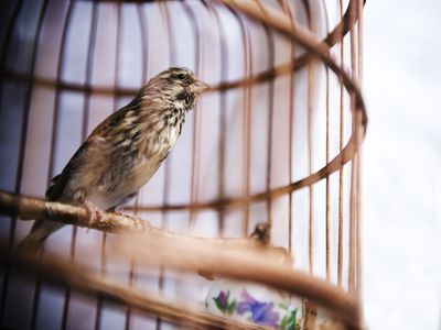 A Guide To Preparing And Painting A Bird Cage