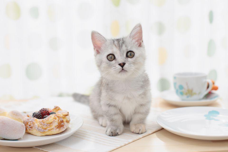 Gatito sobre la mesa en un café gato