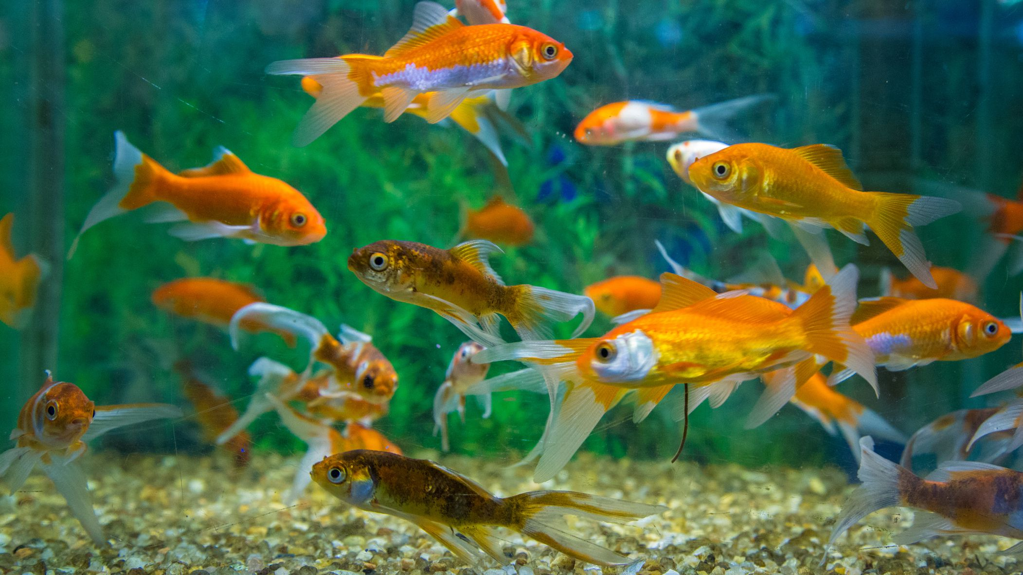 How and Why You Should Seed a New Aquarium