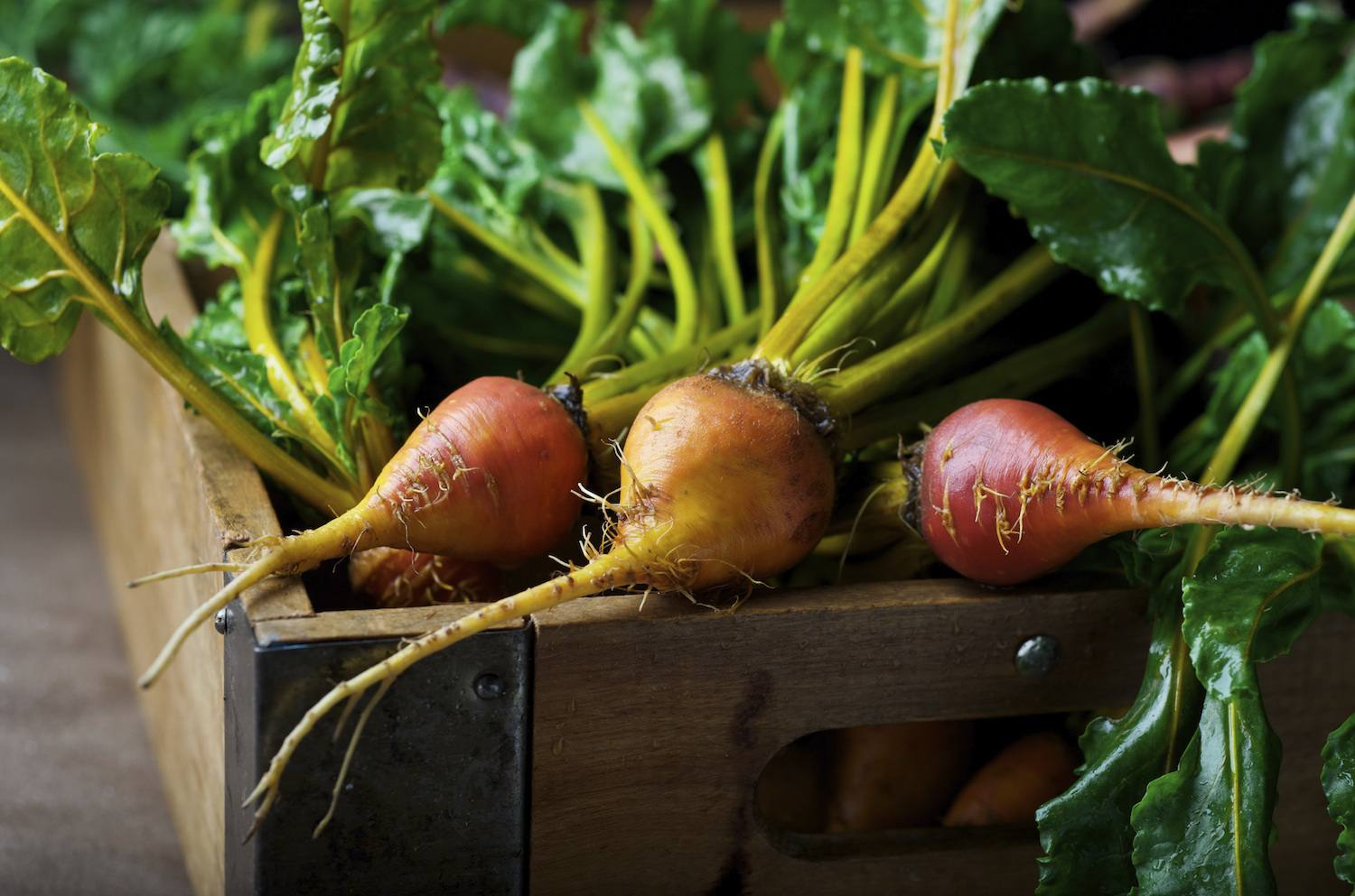 Golden Beetroots in wooden box