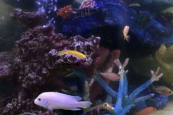 cloudy aquarium
