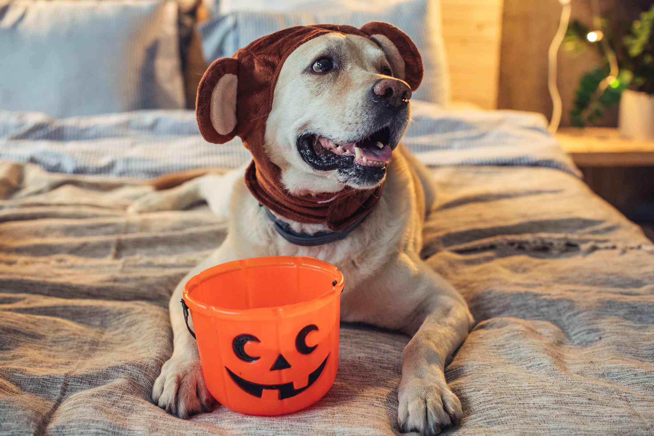 Ready for a little trick or treating
