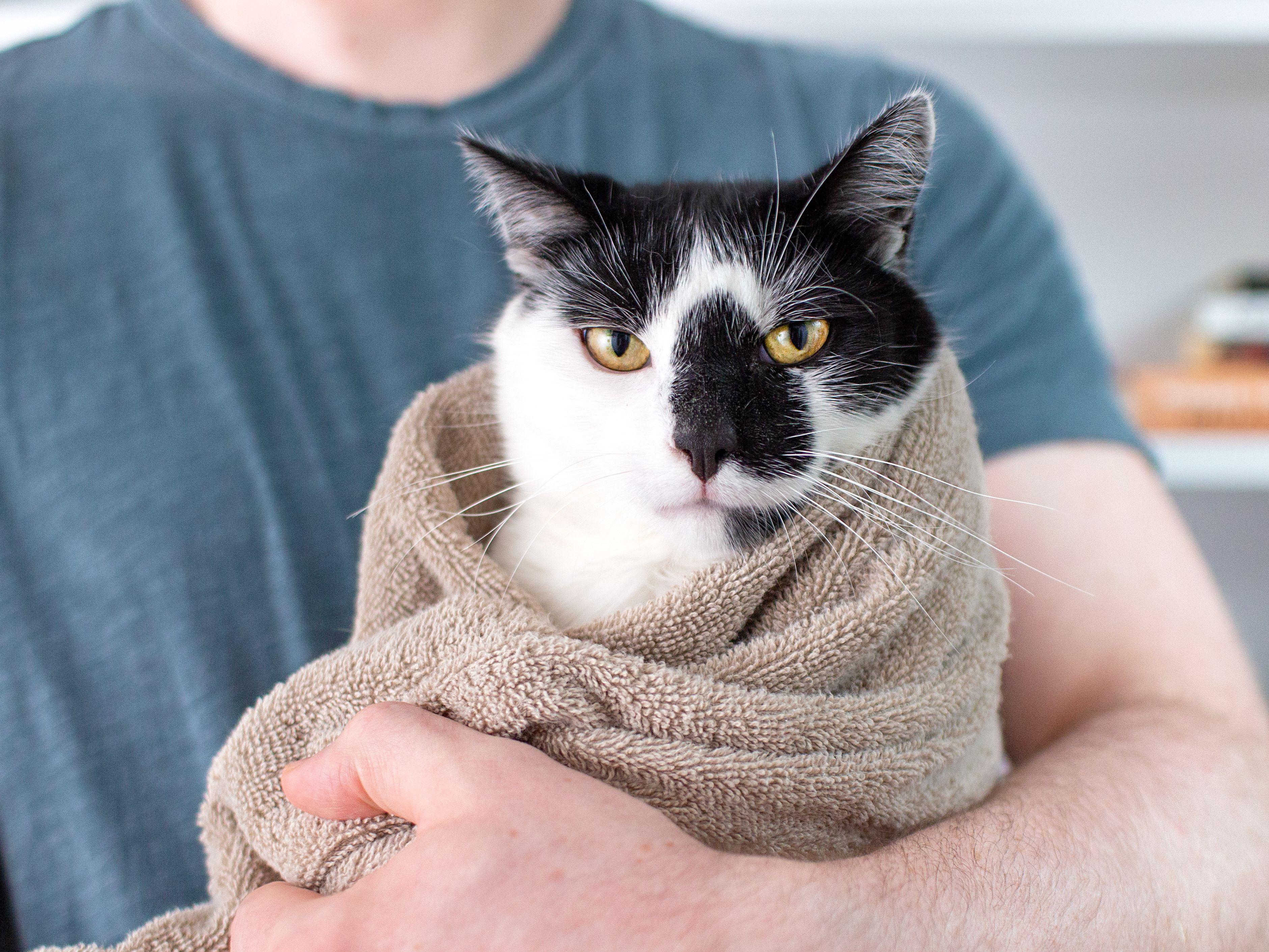 How To Burrito A Cat