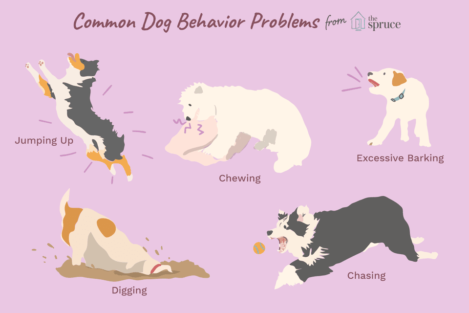 illustration of common behavior problems in dogs
