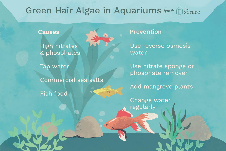 cure and control green hair algae