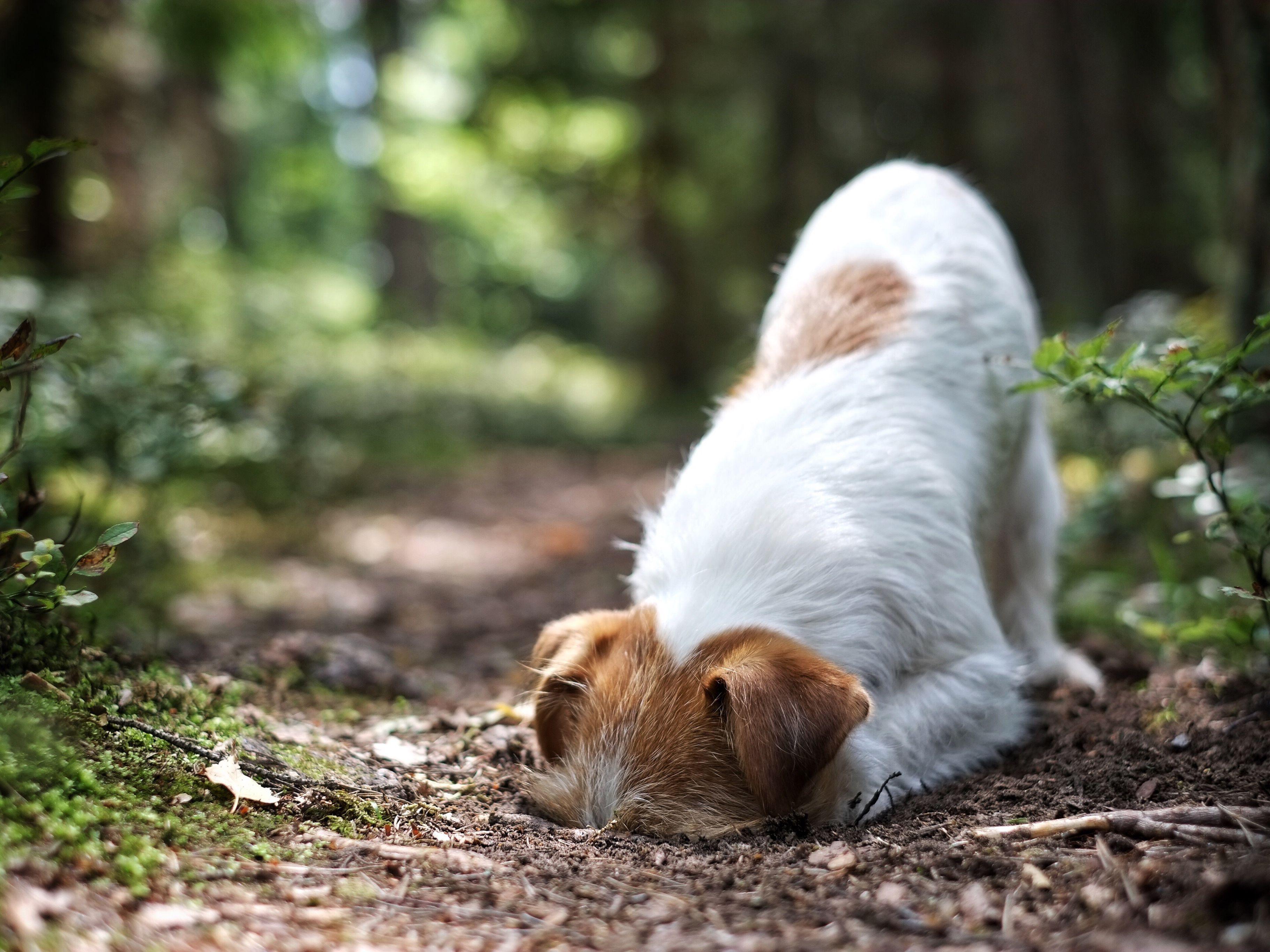 How to Treat Cuterebra in Pets