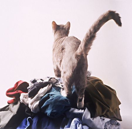 How To Get Rid Of Cat Urine Smell >> How To Remove Cat Urine Odor From Laundry