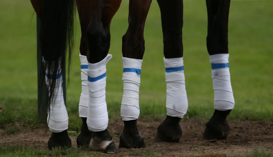Polo Gold Cup - horse's legs.