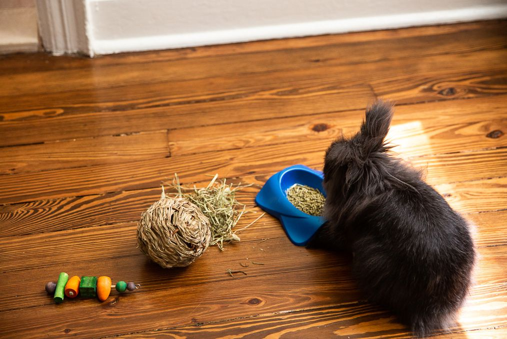 Black pet rabbit in front of bowl of rabbit pellets, pile of hay, and toys