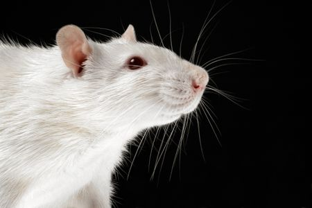How to Treat Tumors in Rats