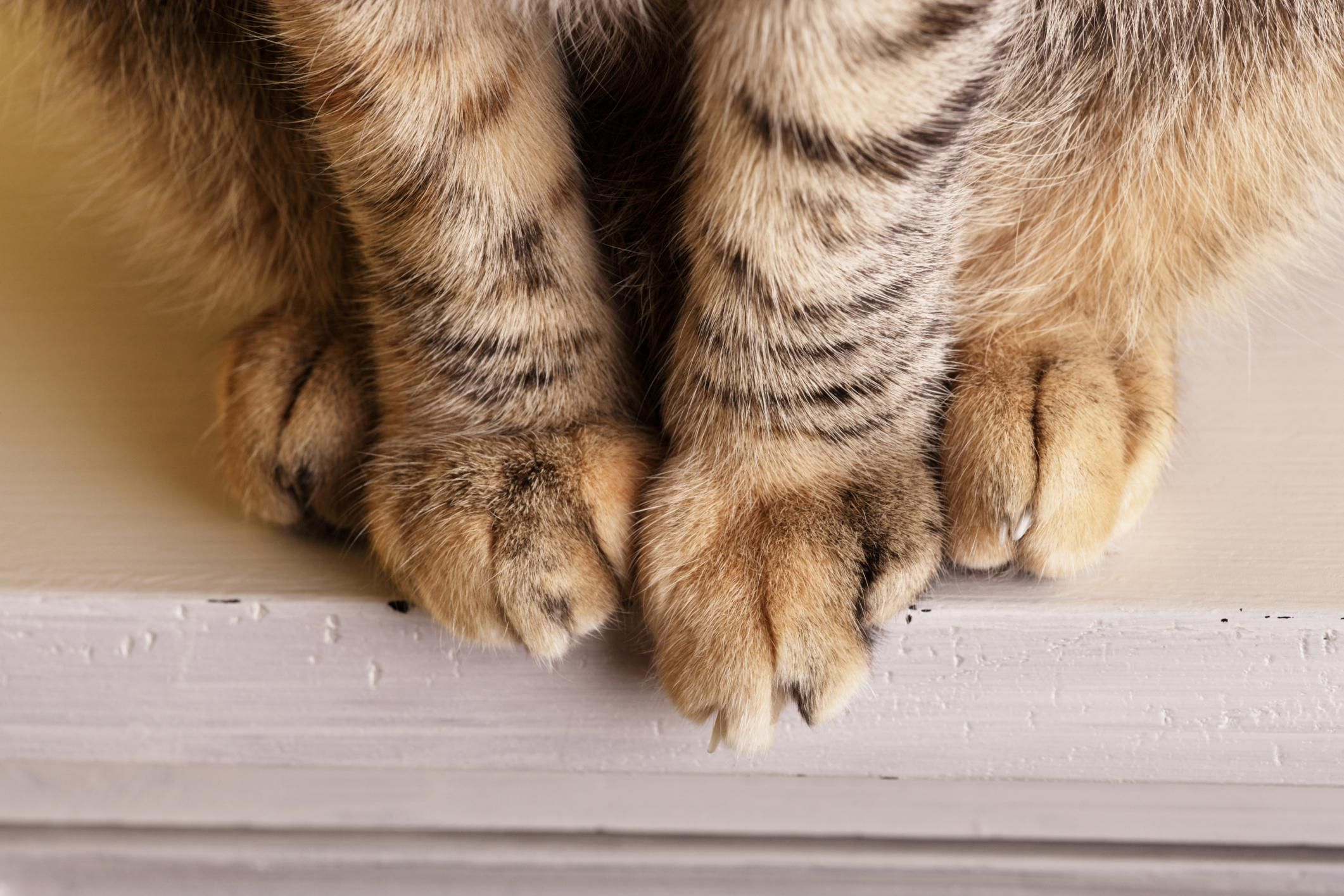 Remarkable What To Do If Your Cat Has A Swollen Paw Uwap Interior Chair Design Uwaporg