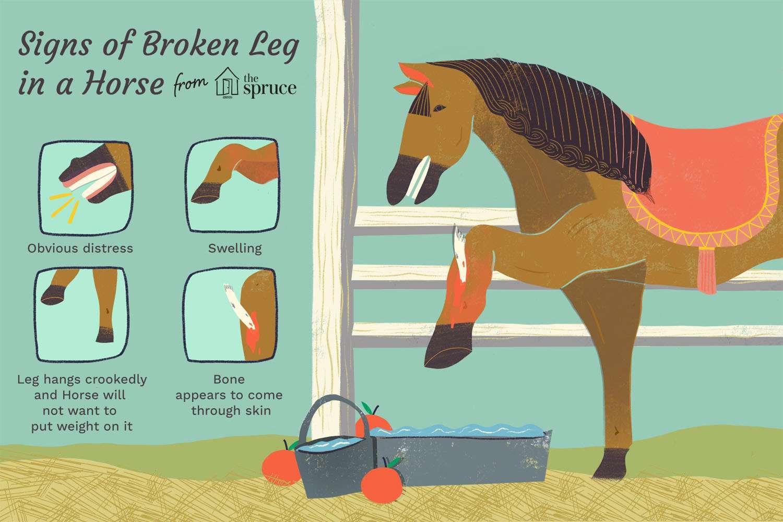 signos de una pierna rota en una ilustración de caballo