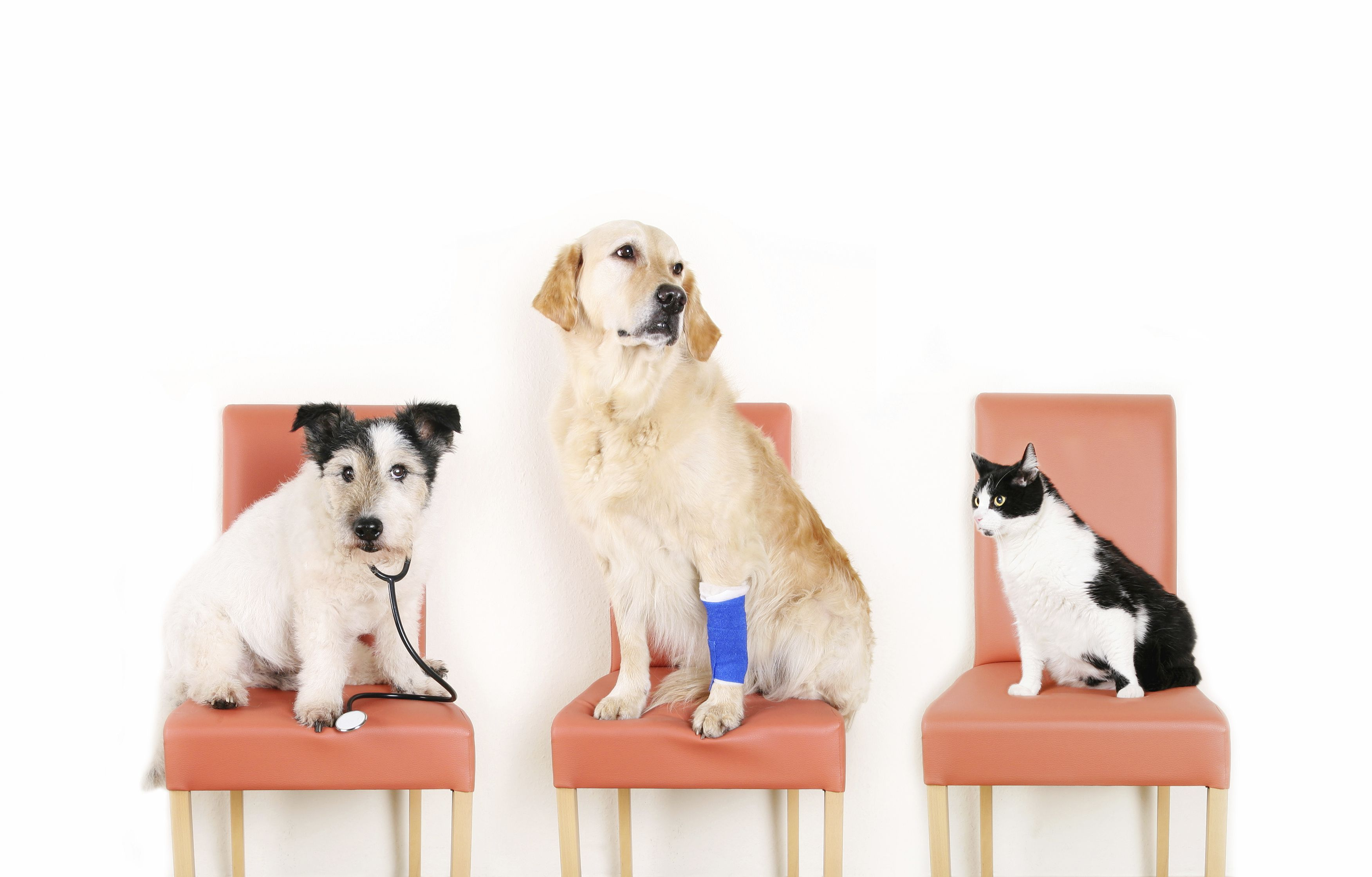 Furosemide For Dogs With Food