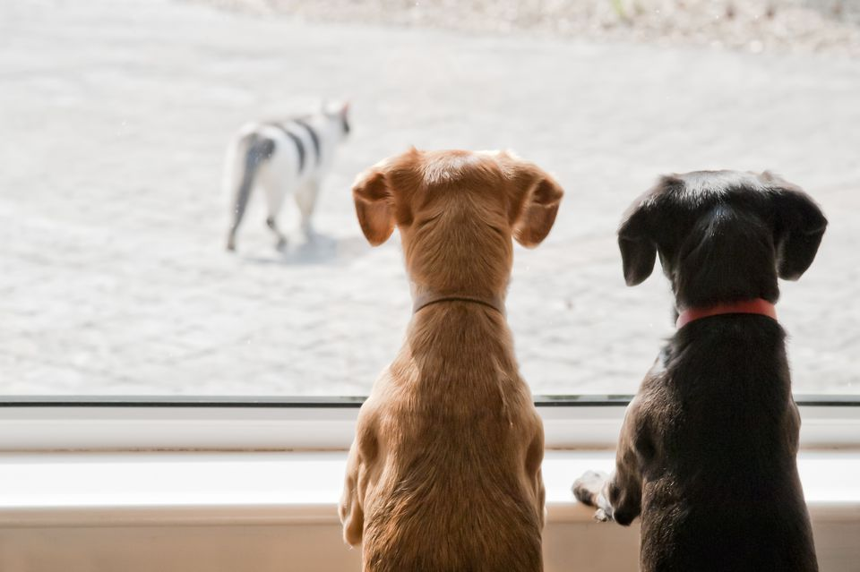 Dogs watching cats