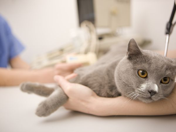How to Treat Giardia in Cats