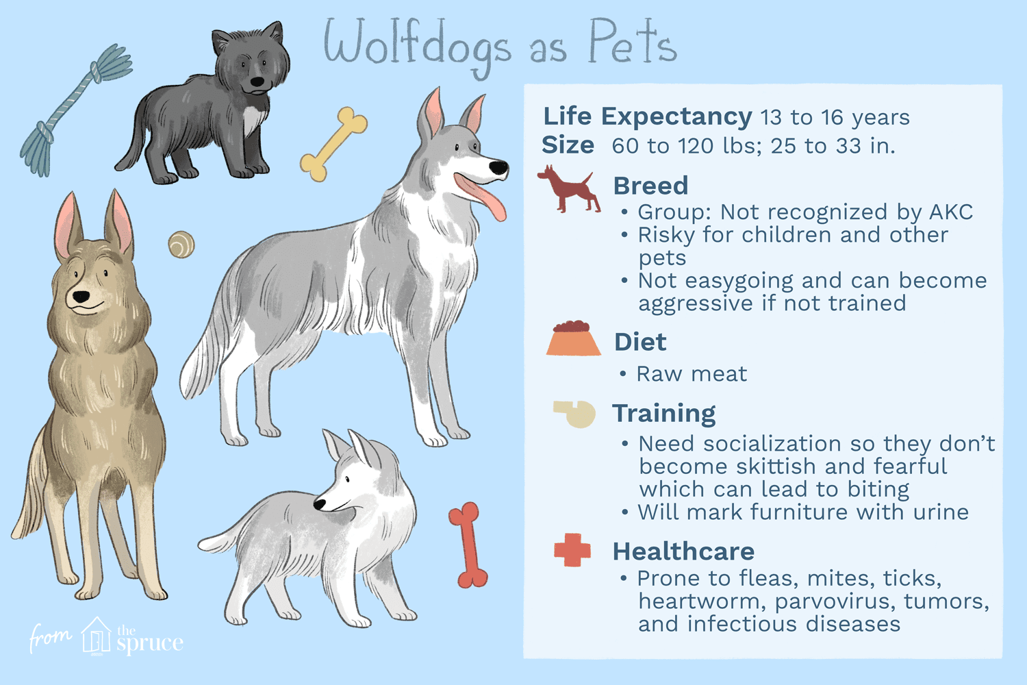 Wolf Dog: Full Profile, History, and Care