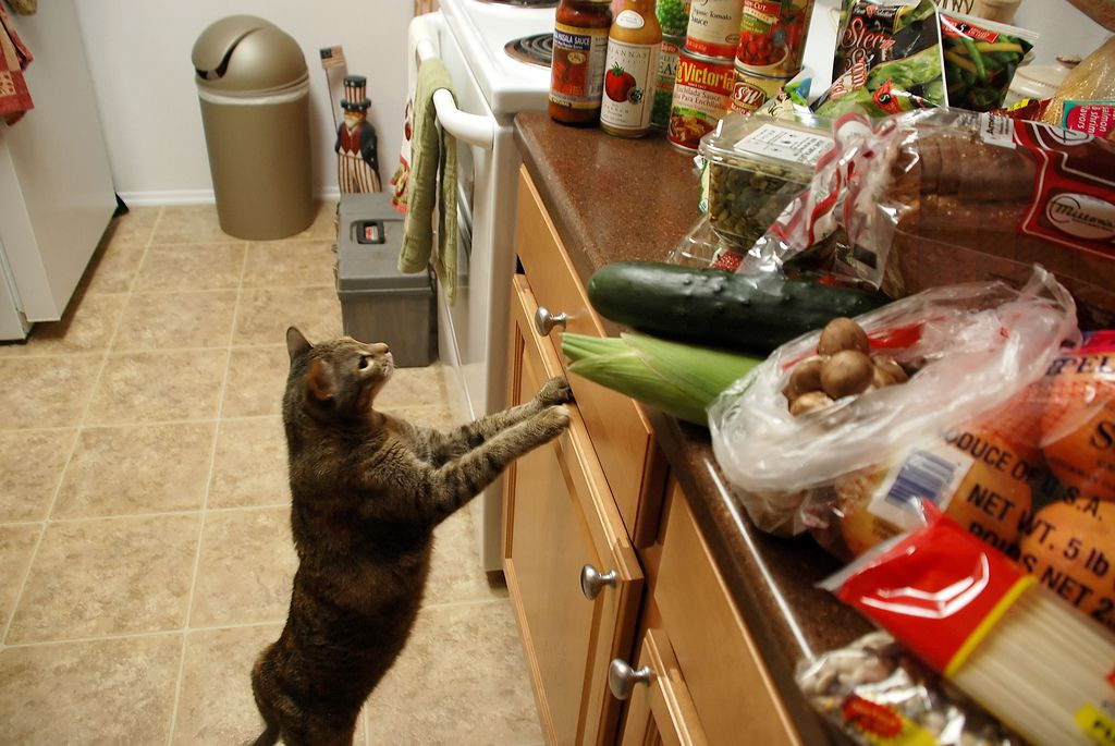 cat jumping up on kitchen counters