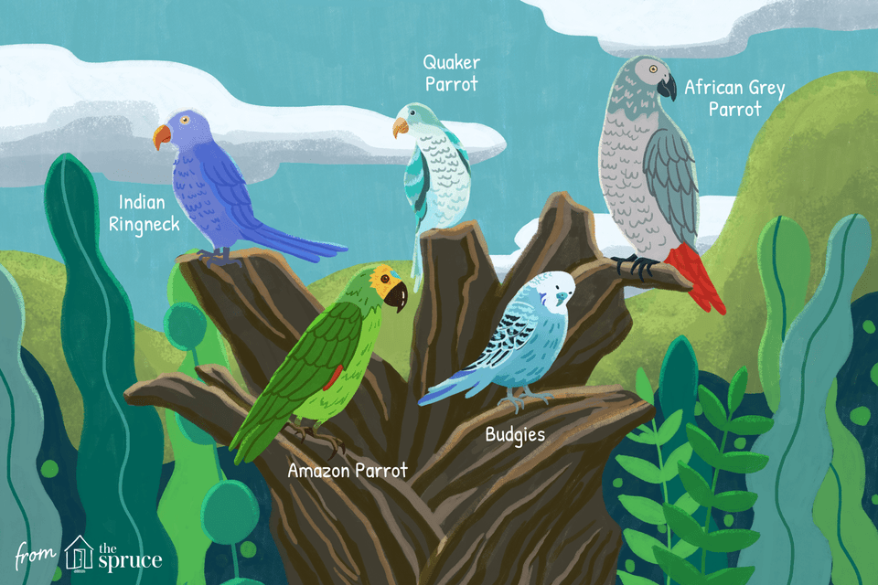 talking bird species illustration