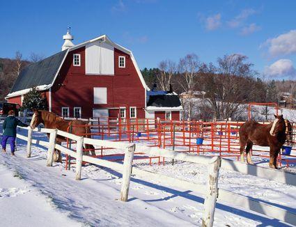 DRAFT HORSES IN BARN YARD IN SNOW IN VERMONT