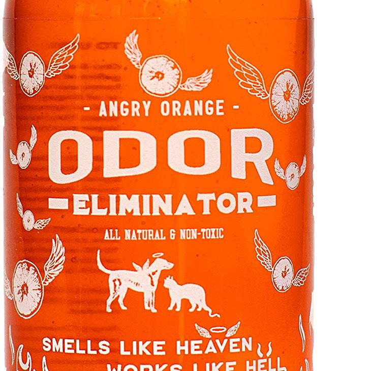 The 8 Best Cat Pee Odor And Stain Removers Of 2020