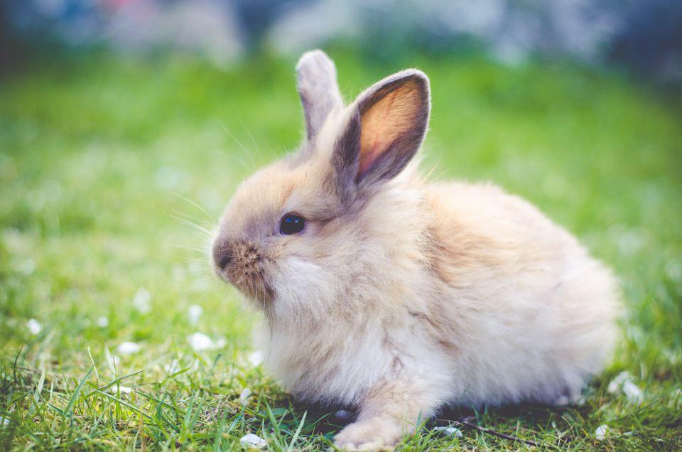 Conejo sentado en el césped