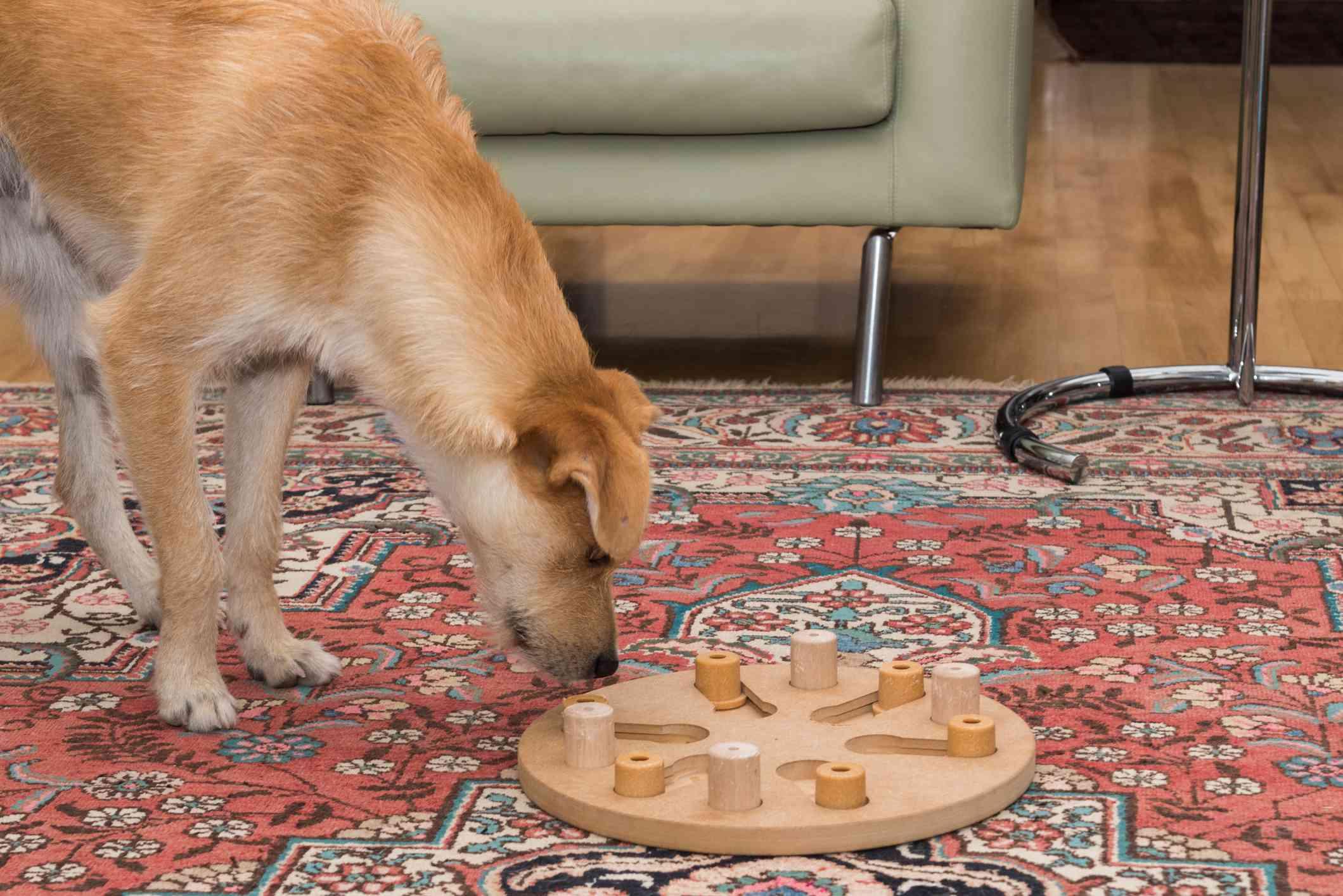 dog interactive toys dog puzzles
