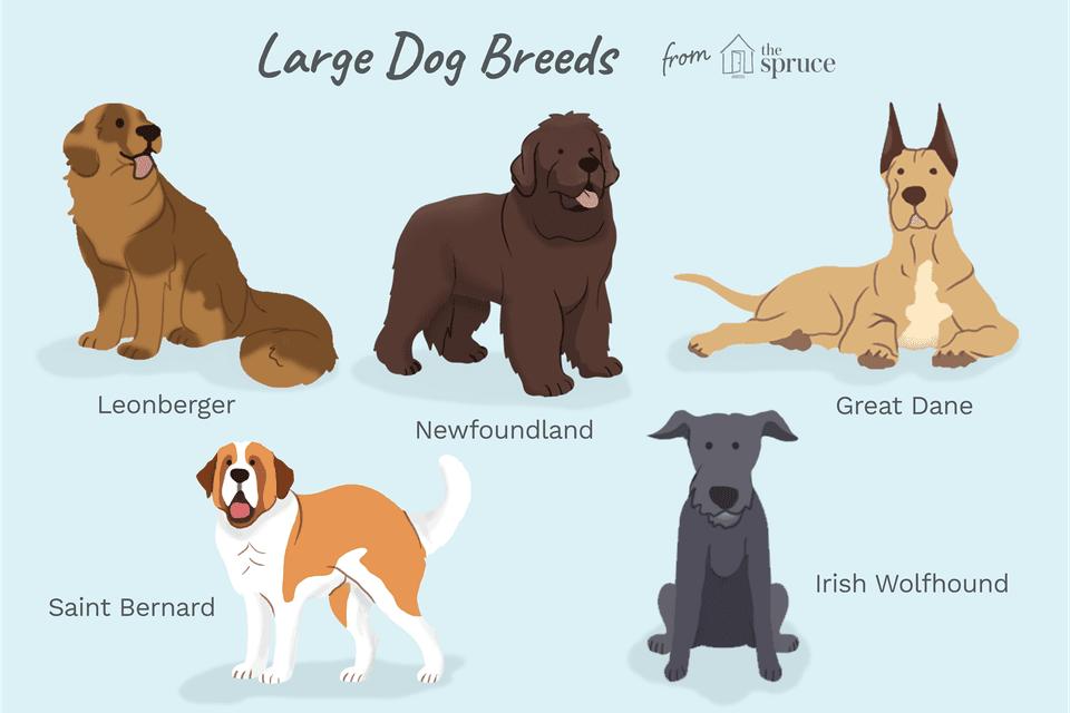 illustration of large dog breeds