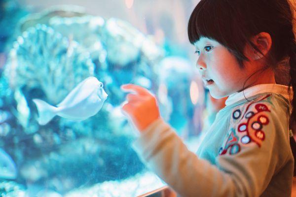 Lovely little girl admiring fish in aquarium