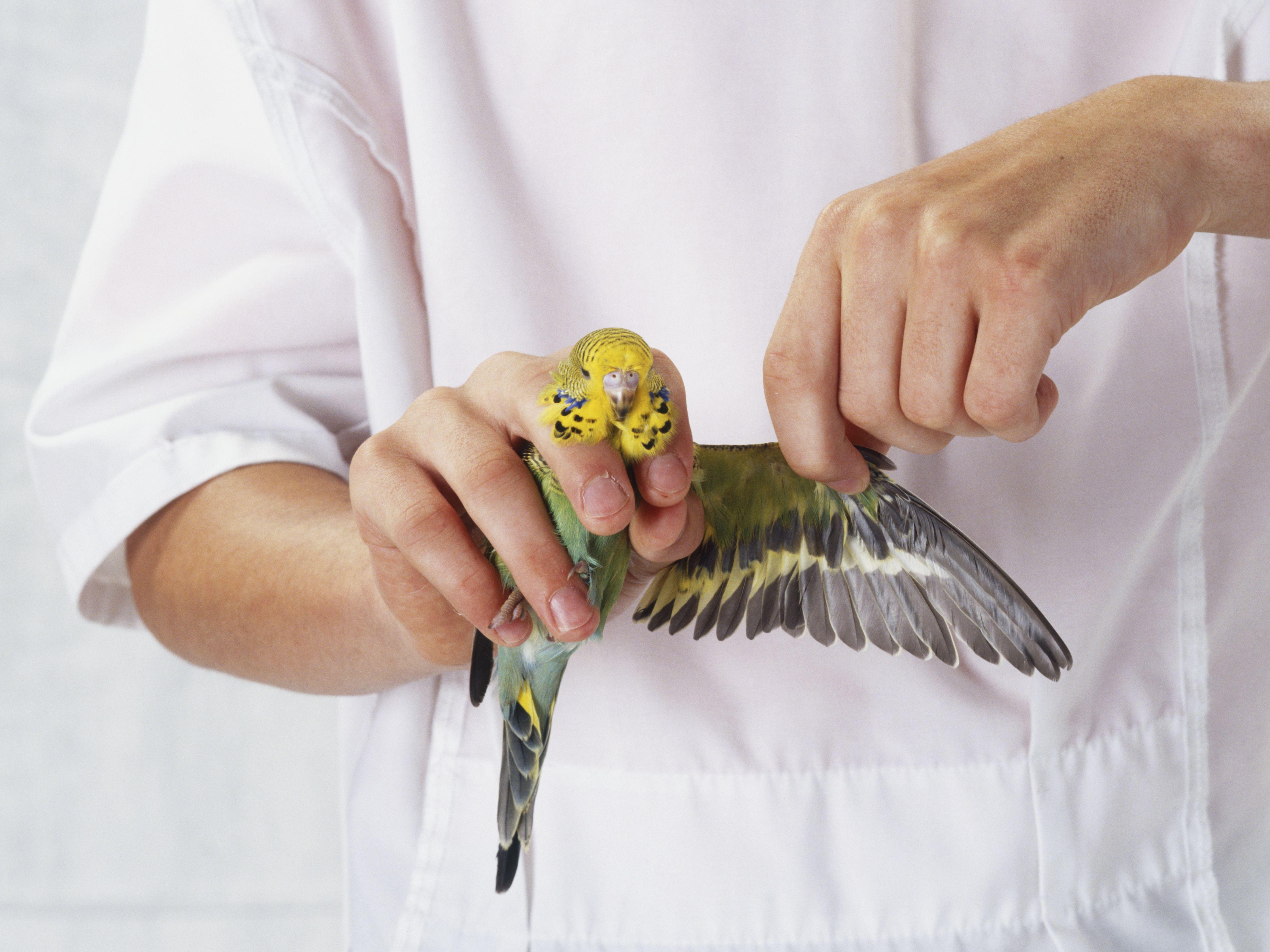 Solo Blue Parakeet Mens Tie Clip Tack Bar