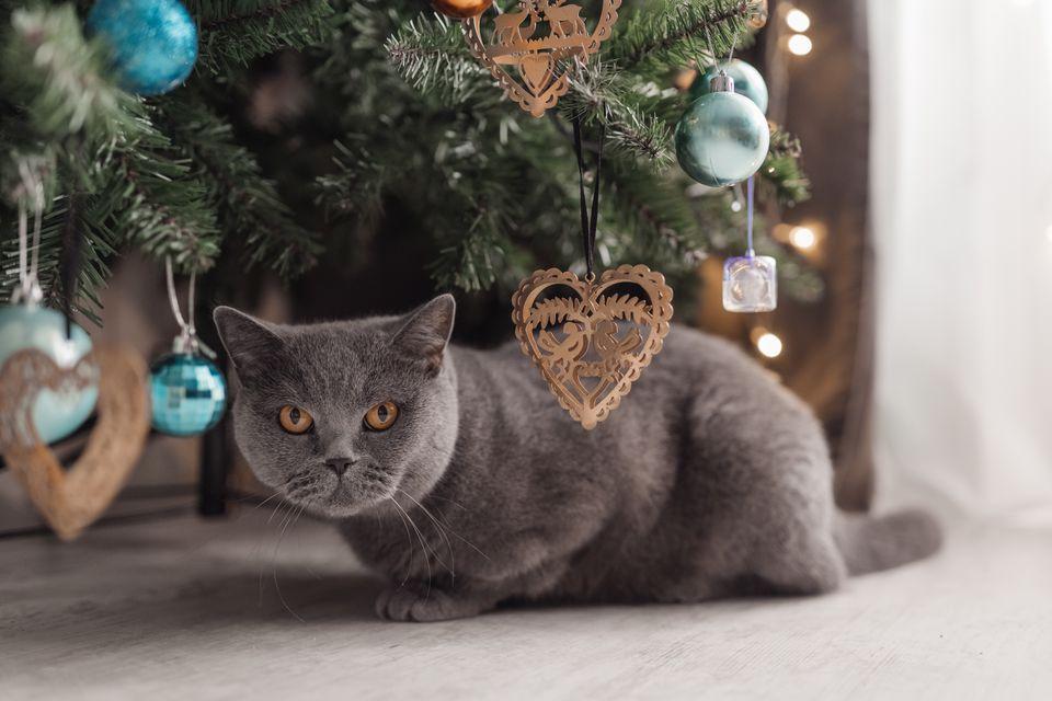 Tabby cat plays at the Christmas tree, Christmas holidays