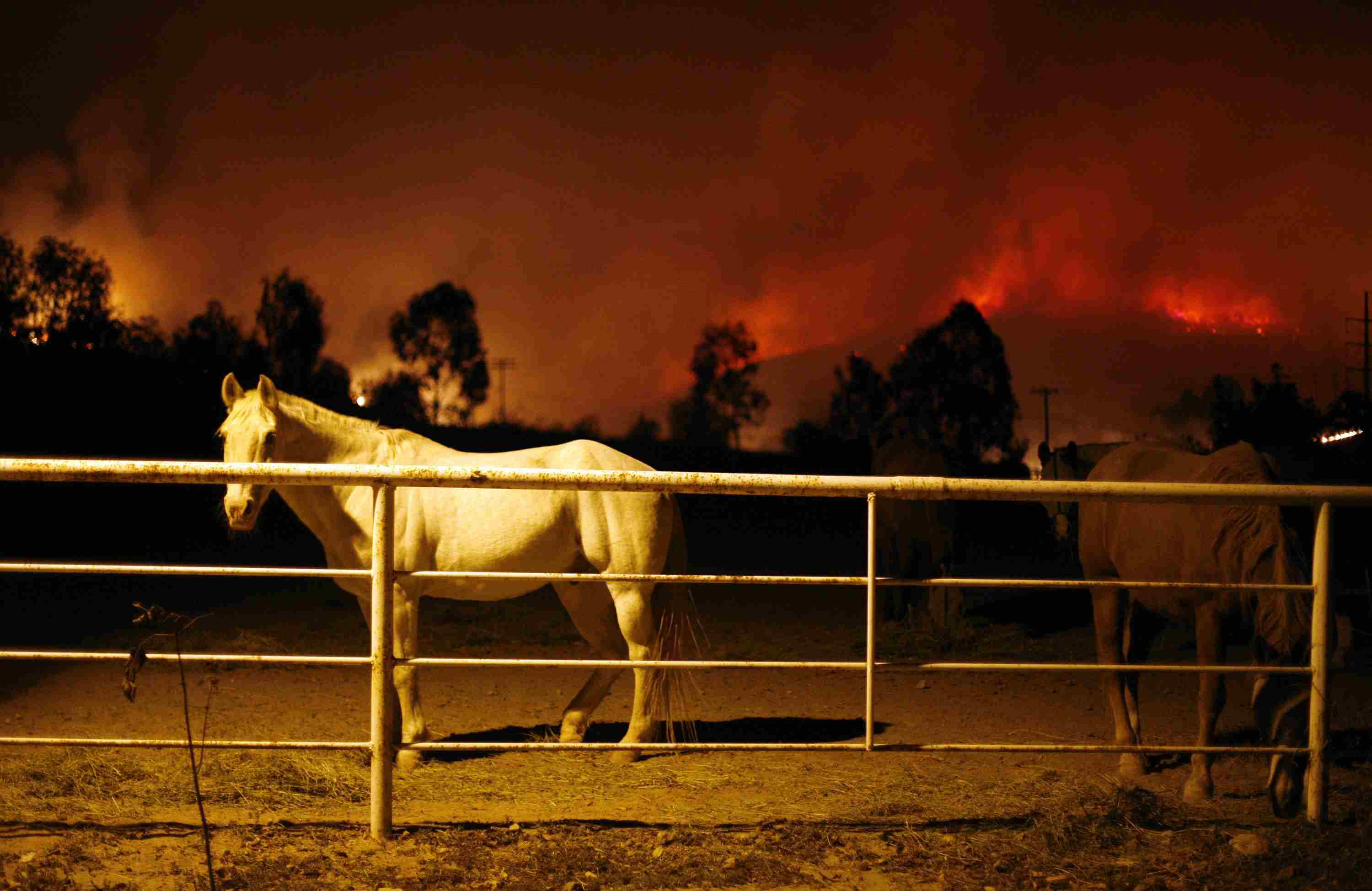 Horses stand in a pen as fire threatens the Bonita neighborhood in San Diego