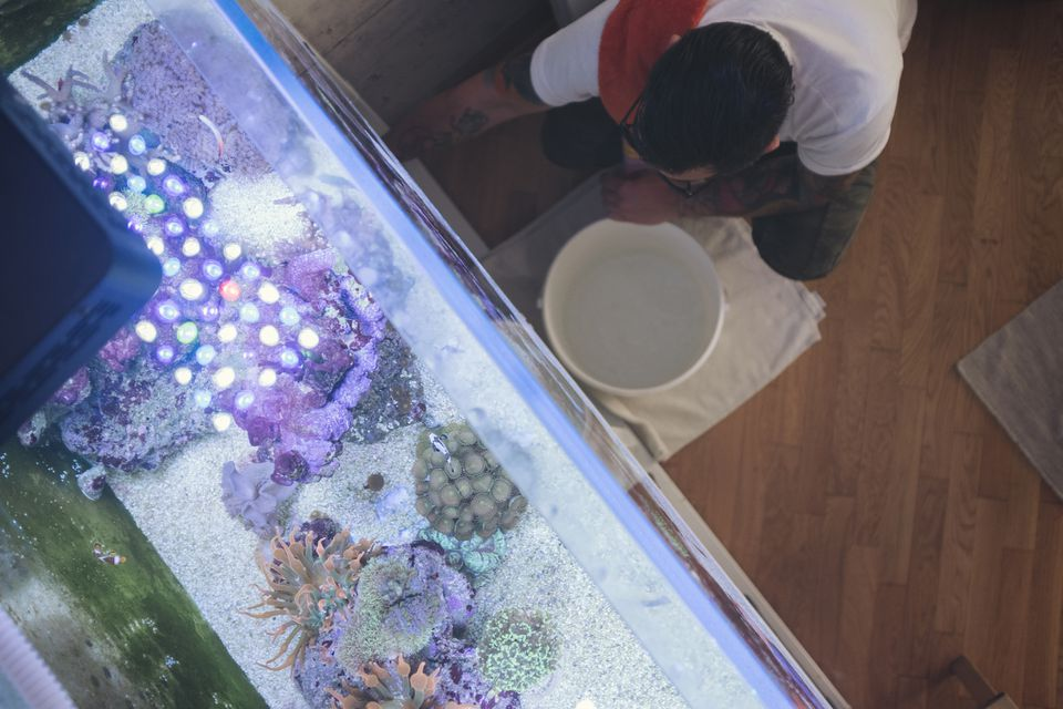 Man inspecting fish tank