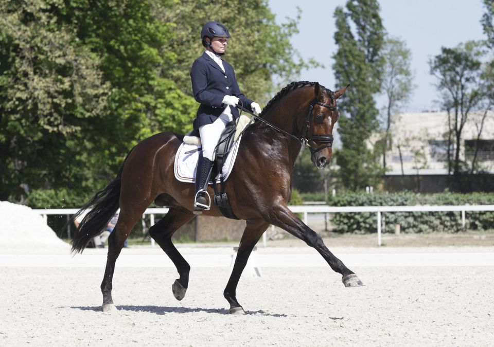 Extended trot dressage