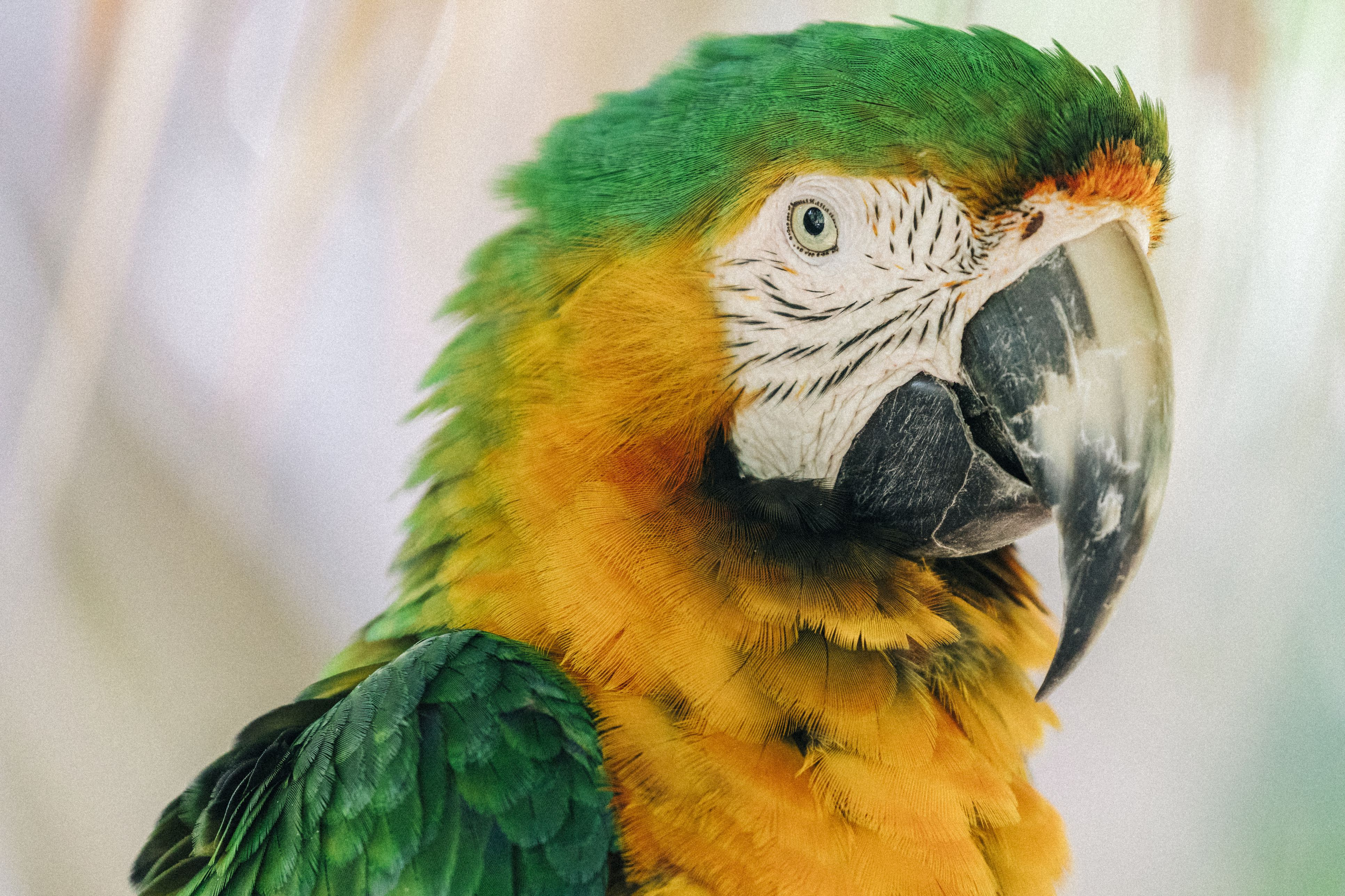 Types Of Macaw Hybrids And Crosses