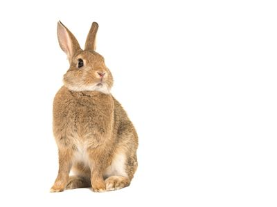 The Best Pet Rabbit Names From A Through E