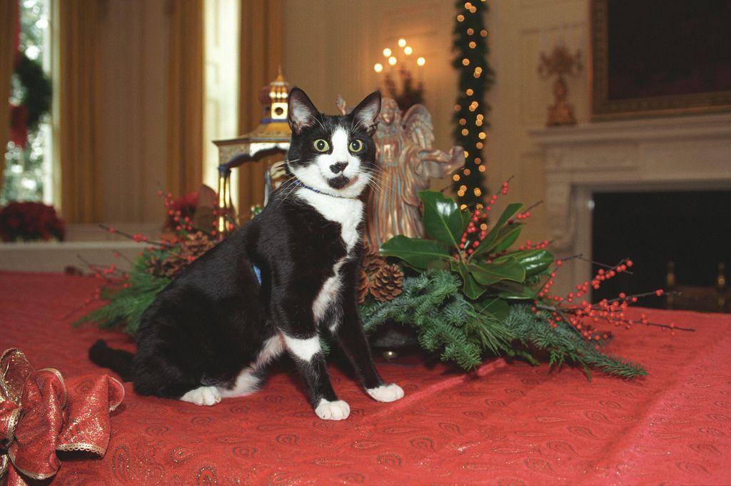 cat christmas plants