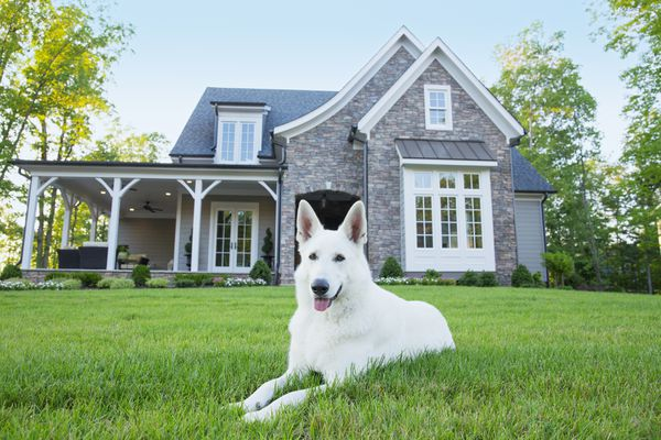 Dog laying in front of suburban house
