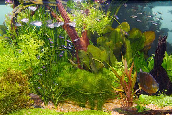 Aquarium plants with fish