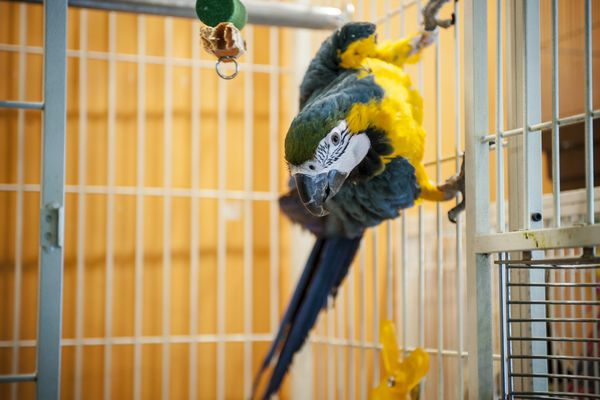 People Appreciate Exotic Birds At Bird Cafe In Tokyo