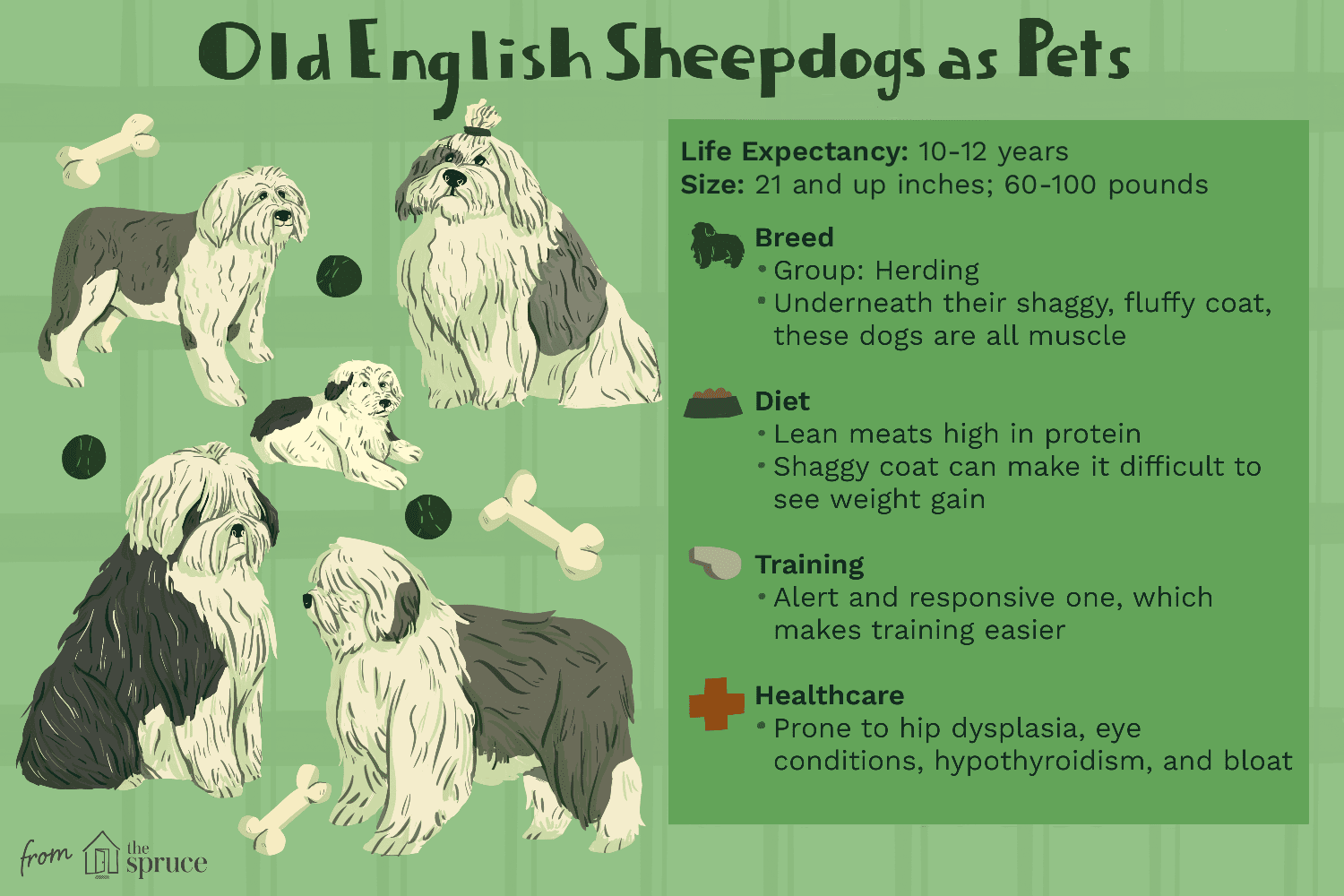 old english sheepdogs as pets illustration