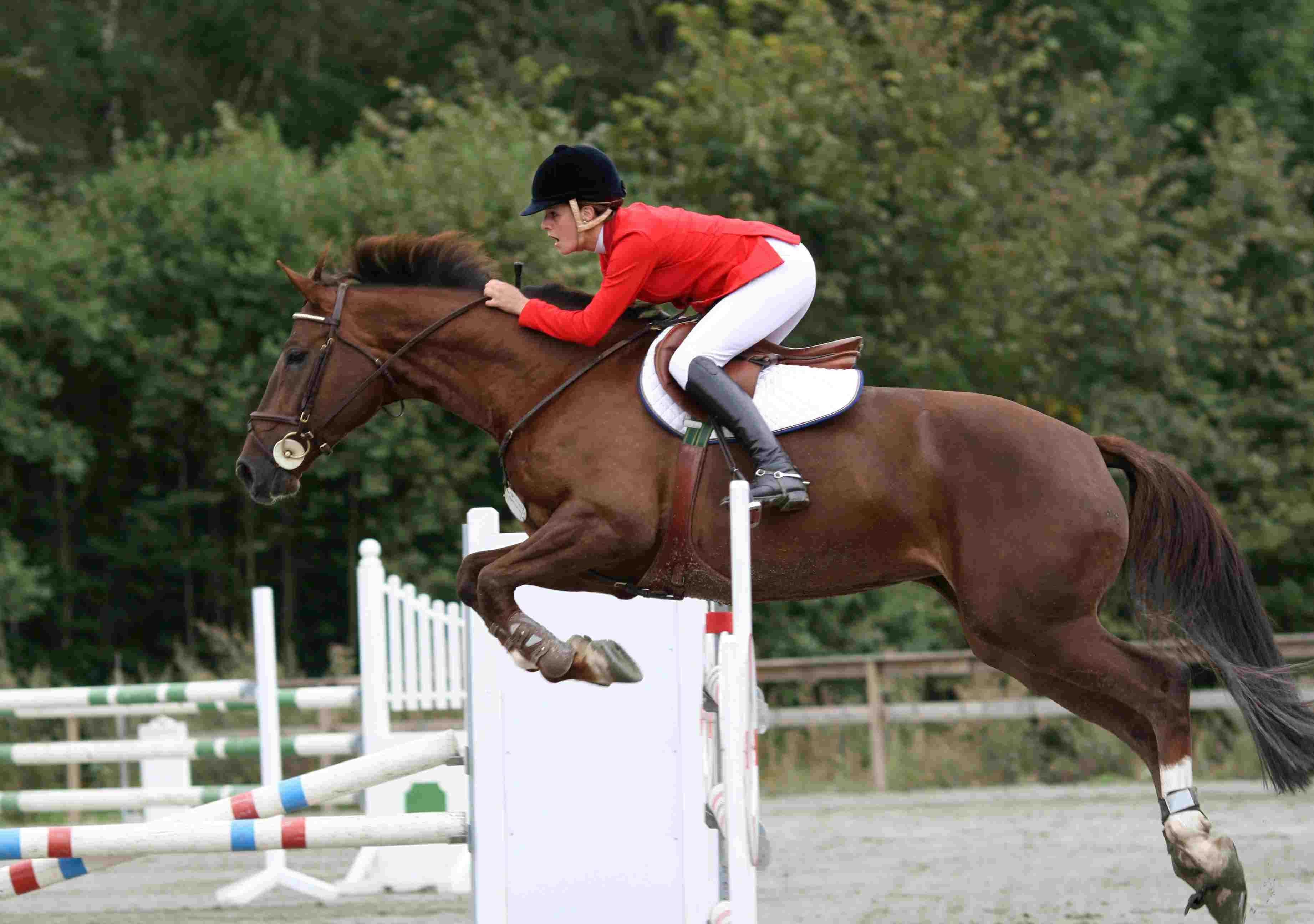 Horse-jumping show competition
