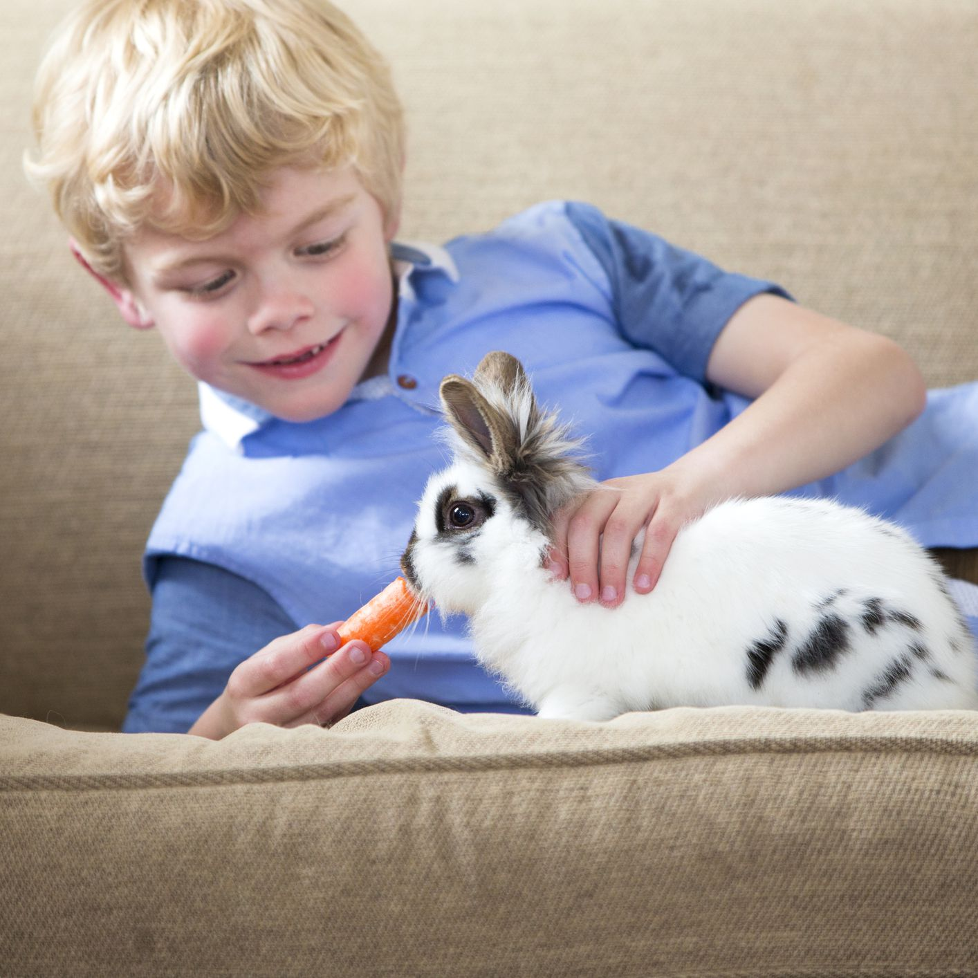 Buying And Caring For A Pet Rabbit
