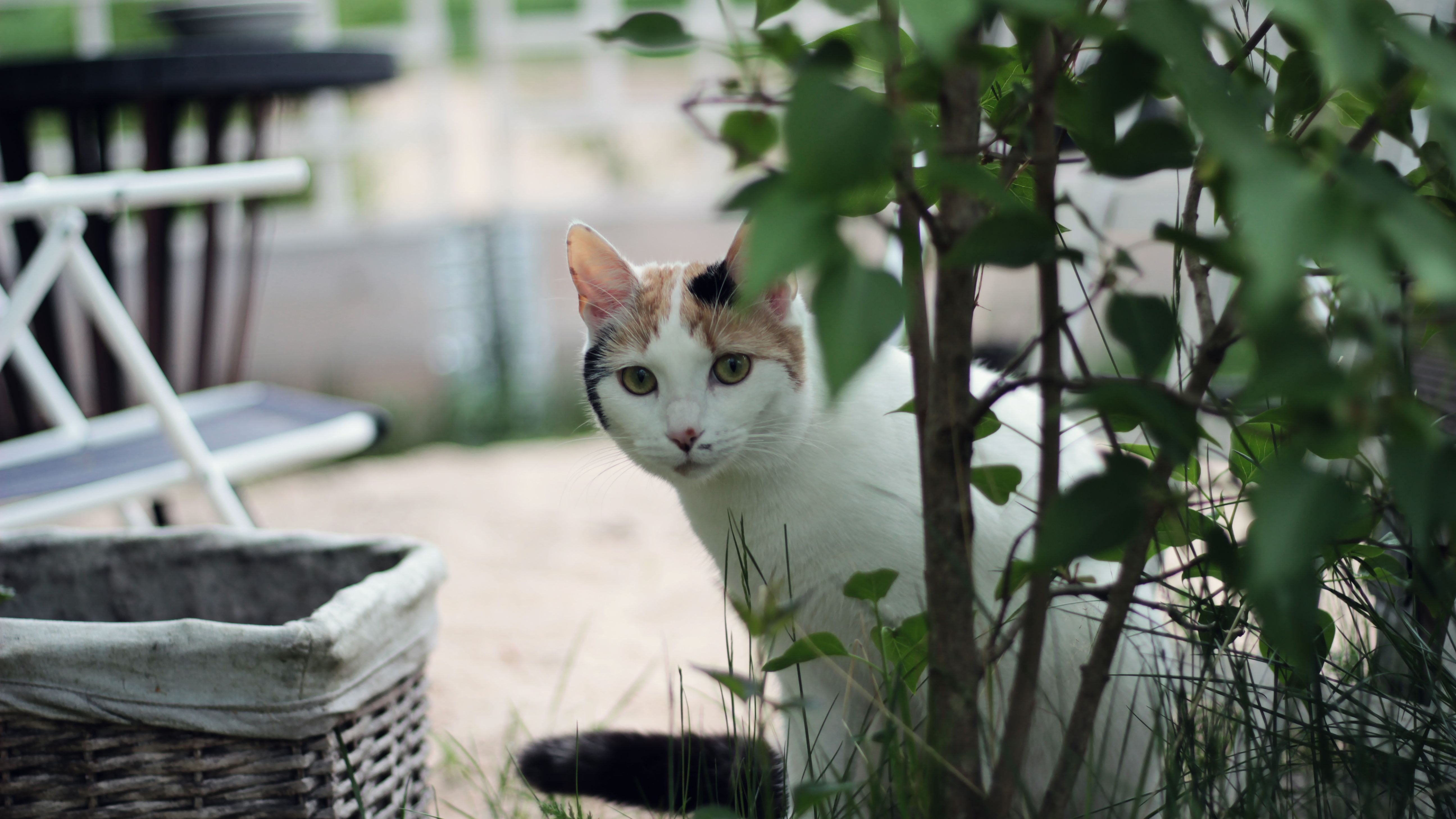 10 Ways To Find Your Lost Cat