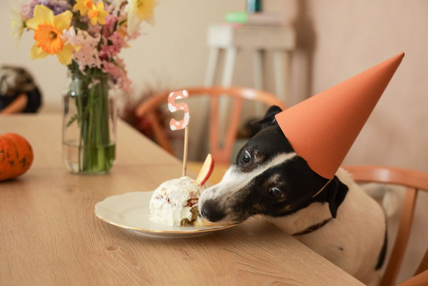 a dog wearing an orange-colored hat and eating cake at a table