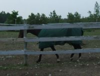 a horse pacing a fence